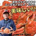 【鳥取】ボイル松葉ガニ5杯 約1.5から1.8kg【代引不可】