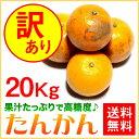 訳あり たんかん ご家庭用 20kg【送料無料】 奄美大島 タンカン (みかん) 果物 フルーツ オレンジ 詰め合わせ