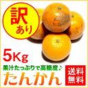 訳あり たんかん ご家庭用 5kg【送料無料】 奄美大島 タンカン (みかん) 果物 フルーツ オレ
