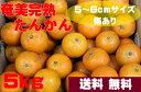 奄美大島産 奄美完熟 たんかん 5kg ご家庭用 S・Mサイズ (傷あり)【送料無料】
