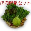 庄内の野菜セット(季節の商品5?8種類詰合せて発送します※お野菜の指定はできません)