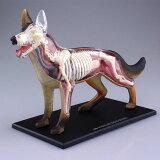 立体パズル 4D VISION 動物解剖モデル No.18 犬解剖モデル(再販)[スカイネット]《取り寄せ※暫定》