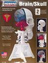 人体模型 脳&左頭蓋骨 プラモデル(再販)[リンドバーグ]《取り寄せ※暫定》