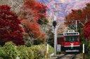 ジグソーパズル 秋柄 紅葉と箱根登山鉄道 1000ピース(11-412)[エポック]《取り寄せ※暫定》