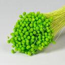 アマレリー 120g ライトグリーン【大束・お徳用】 <ドライフラワー・フラワーアレンジメント・花材・花資材>