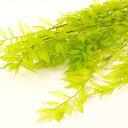 ラスカス ライムグリーン  <プリザーブドフラワー・フラワーアレンジメント・花材・花資材>