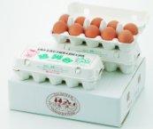 朝採れ!! 岐阜県産 醍醐卵 30個入り Lサイズ