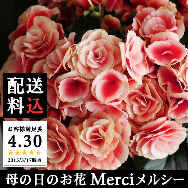 【 期間限定!ポイント3倍 】[ 総合ランキング1位受賞 ]母の日 Merci メルシー【送料無料】