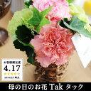 母の日 花 Tak タック ギフト アレンジメント 花束 鉢植え