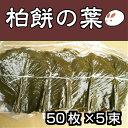 柏の葉50枚×5束 柏の葉 柏餅の葉っぱ 柏餅