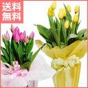 【送料無料】スプリング花 ギフト チューリップ鉢植えピンク・イエロー