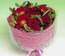 【あす楽16時まで受付】(スカーレット)誕生花【品質保証★花】【あす楽対応】【楽ギフ_包装】