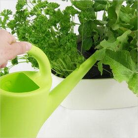 Plastexエバーグリーンジョウロ2L【プラステックスEvergreenじょうろジョーロガーデニング水やりガーデン庭花植物EEROAARNIO北欧デザイン】