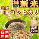 新米 30kg コシヒカリ 玄米 お米 30年産 茨城県産 ...