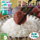 新米 コシヒカリ 10kg(5kg×2袋) 福島県産 お米 3年産 送料無料 『令和3年福島県産コシヒカリ(白米5kg×2)』 【RCP】