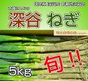 埼玉県深谷市中瀬地区栽培 深谷ネギ 5kg