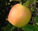 青森りんご「サン陸奥」家庭用 5kg