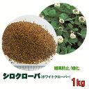 種子 シロクローバ 1kg