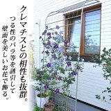 EGラティス ウォールアーチ【10P02jun13】【RCP】