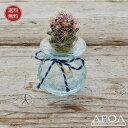 サボテンクラゲ1個・クラックサボテンとバリガラスお部屋で簡単人気の水耕栽培