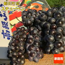 ●送料無料● スチューベン 家庭用 青森県産 ぶどう 2kg...