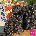 ●送料無料●スチューベン 秀品 青森県産ぶどう 2kg(6〜...