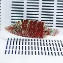 モチノウオ.sp 5-7cm±! 海水魚 ベラ 15時までのご注文で当日発送【ベラ】