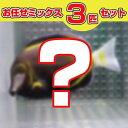 ハギMIX 3匹セット! 海水魚 ハギ 【PHセール対象】【ハギ】