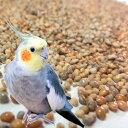 小鳥のえさ 鳥 餌 / 国産無農薬シード オリジナルミックス 1kg【あす楽】