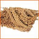 オリジナル 粟の穂(白) 500g