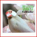 カレンダー 2017 壁掛け / 2017 ミニカレンダー 文鳥 【あす楽】