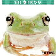 【ポイント5倍21日20時まで】2019年ミニカレンダー THE FROG(カエル)【オリジナルステッカー付き】