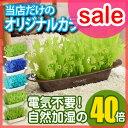 【セール】 加湿器/エコロジー加湿器 ミスティガーデン2nd...