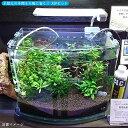 送料無料ASPセット熱帯魚用ルノアール360LED当店オリジ
