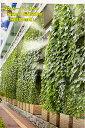 緑のカーテンネット 幅2m×長さ2m 網目10角 ゴーヤ 朝顔 ヘチマ ひょうたん エアコンの使用量減に つる性植物用ネット