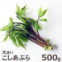 ご注文日6/2分出荷中天然・大きいコシアブラ(18cm以下)500g(大小バラ詰め)※送料別(クール便)