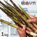 根曲り竹1kg予約販売予約販売【ご注文日:6/20分 出荷中】天然・根曲り竹まとめて1kg