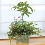 光触媒 インテリア 観葉植物 グリーン 植物 造花 イミテーショングリーン 人工 寄せ植え パキラ 高さ45cm テーブルタイプ 人工観葉植物 フェイク アートグリーン 開店祝い