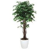 光触媒 観葉植物 ベンジャミン リアナ 高さ180cm 大型 人工観葉植物 人工植物 インテリア フェイクグリーン 造花 消臭 抗菌 防汚 ホルムアルデヒド 分解 水やり不要 イミ