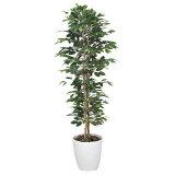 観葉植物 植物 光触媒 グリーン ベンジャミン スリム 高さ160cm 大型 人工観葉植物 人工植物 インテリア フェイクグリーン 造花 消臭 抗菌 防汚 ホルムアルデヒド 分解