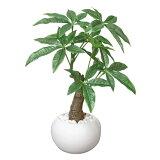 光触媒 観葉植物 イミテーショングリーン イミテーション フェイクグリーン パキラ グリーン 高さ27cm 光触媒人工植物 人工観葉植物 人工植物 光触媒人工観葉植物 玄関 寝室