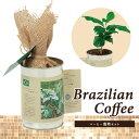コーヒー 栽培 セット 家庭菜園 おしゃれ 園芸 インテリア 68734 世界の植物 コーヒー栽培セット