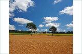 北海道 富良野麓郷 メルヘンの木 2LW写真 レビューを書いて【】【RCP】 2LW-303美しい富良野の風景写真を。