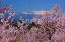 美術, 美術品, 古董, 民間工藝品 - 平田 桜と吾妻 福島 2LW写真  2LW-30