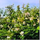 野ばらとスイカズラ 花 茨城 つくば オリジナル 風景写真パネル 41×41cm HN-130-S6【楽ギフ_包装】 壁掛け 壁飾り 癒やし 装飾 花のインテリアアート フォトアート ポスター リビング 玄関 お祝い プレゼント ギフトに 野バラ