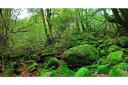 ポストカード5枚で【送料無料】屋久島 もののけ姫の森 風景 ...