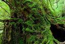 ポストカード 屋久島 もののけ姫の森 風景 写真 ギフト お...