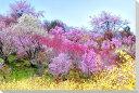 オリジナル 写真パネル 花見山5 福島市 風景写真パネル クロス地 24×16cm CLO-24-P