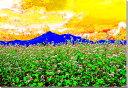 磐梯山と蕎麦の花 福島 CG写真パネル 65.2×45.5cm CG-043-M15【楽ギフ_包装】