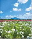 筑波山 小貝川 コスモス 風景写真パネル 80.3×65.2cm MID-2-F25